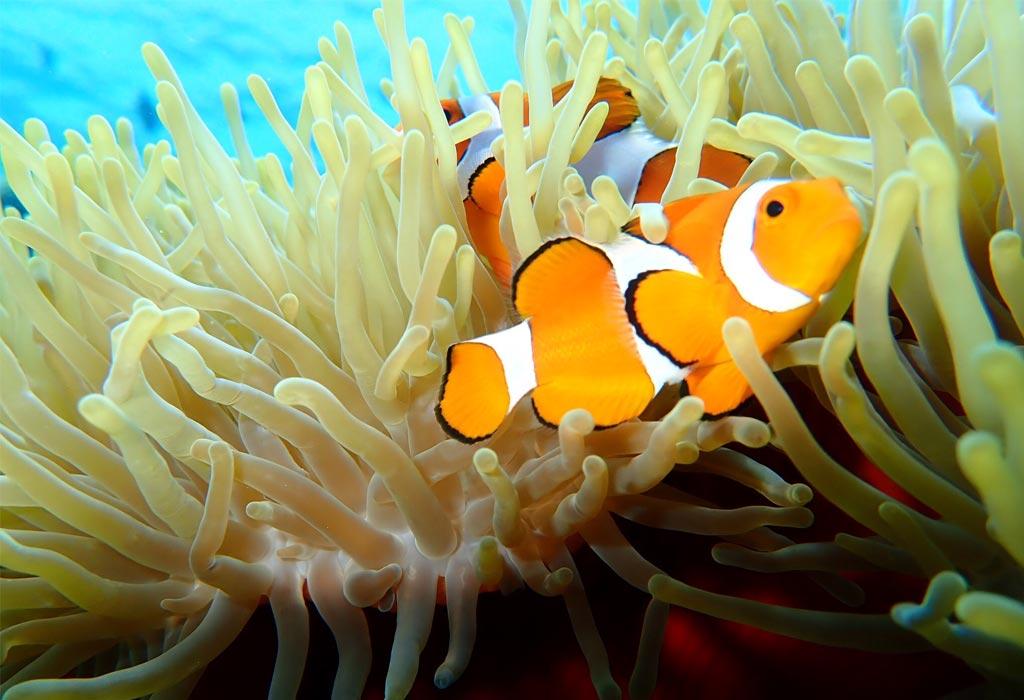 Nemo-Bunaken